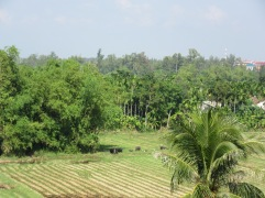 The view from our hotel of the paddy fields