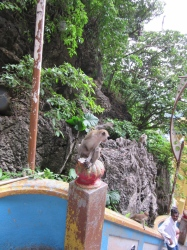 A monkey at the Batu cave