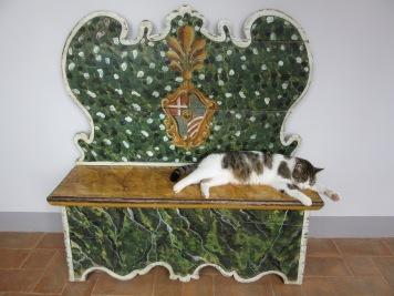 A sleep cat at the Villa Armena