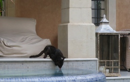 Cat Vs Swimming pool